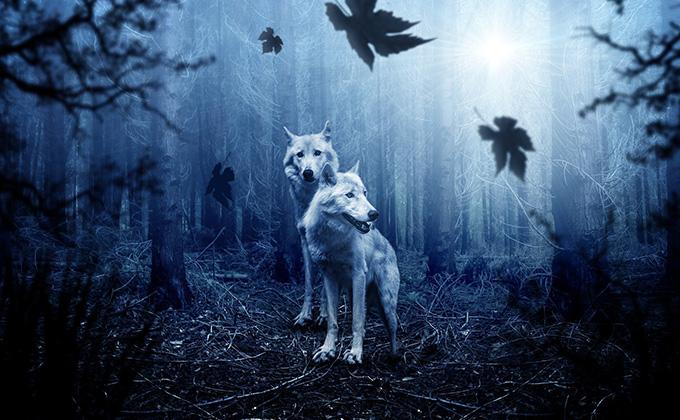 狼の象徴と意味